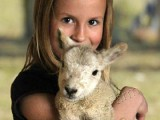 Image showing a girl holding a lamb